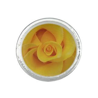 Romantic Yellow Rose Petals