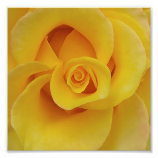 Romantic Yellow Rose Petals Photo Print