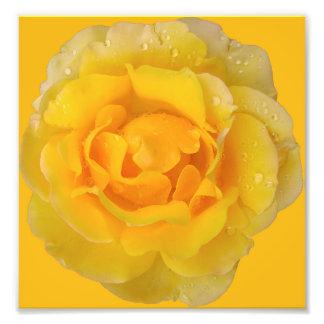 Romantic Yellow Rose Water Drops Photo Print
