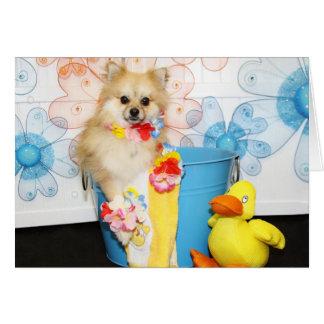 Romeo - Pomeranian -1 Card