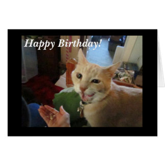 Romeo the Cat Happy Birthday Card