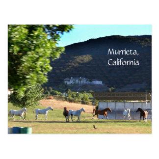 Romping Horses in Murrieta, CA Postcards