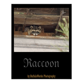 Roofie Raccoon Poster