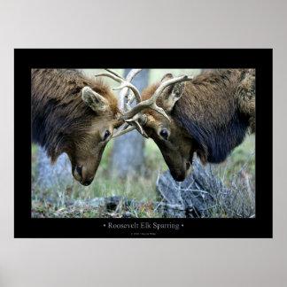 Roosevelt Elk Sparring Poster