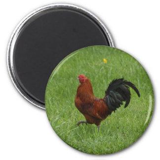 Rooster 1 - magnet