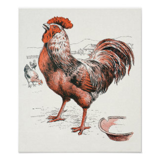 Rooster - Archival Print