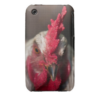 Rooster close up portrait iPhone3 case