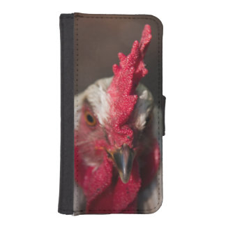 Rooster close up portrait iPhone SE/5/5s wallet case