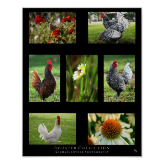"""Rooster Collection"" Poster"