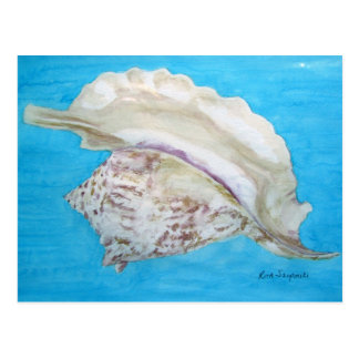 Rooster conch postcard