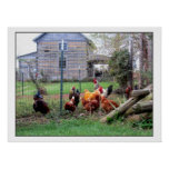 Rooster Farm Print