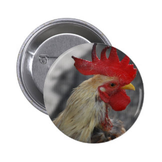 rooster pins