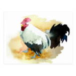 Rooster with an Attitude Post Cards