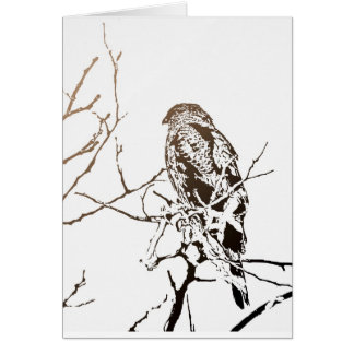Roosting Hawk Card