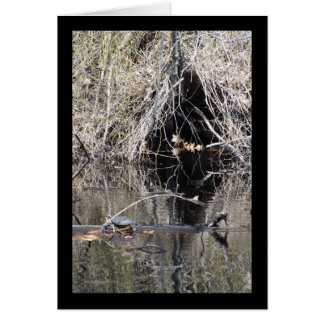 Root Cave Greeting Cards