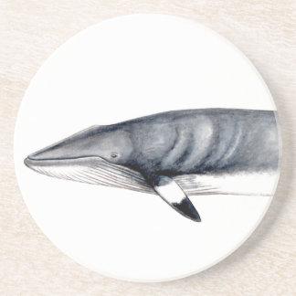 Rorcual aliblanco puts glasses, minke whale coaster
