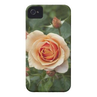 rosa-1859002 iPhone 4 case