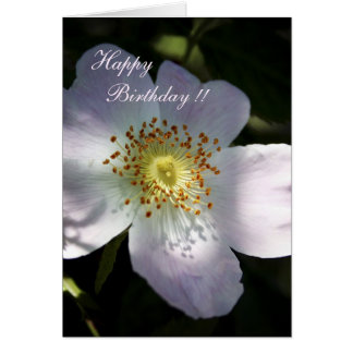 Rosa Canina - Dog Rose Greeting Card