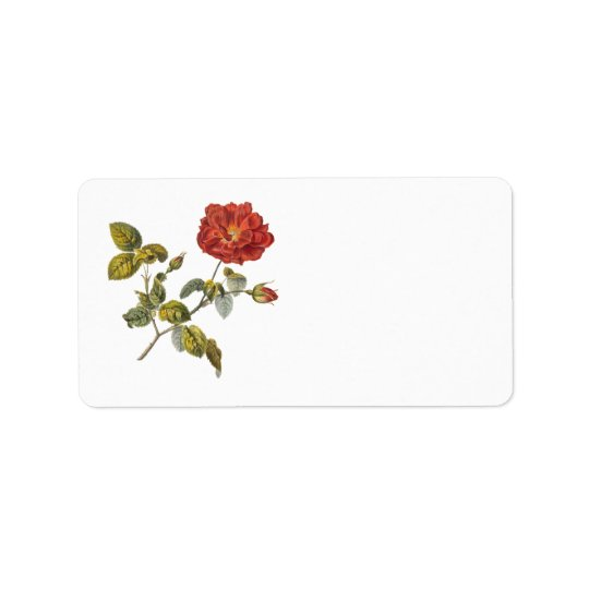 Rosa Gallica Beautiful Red Antique Rose Vintage Address Label