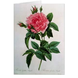 Rosa Gallica Regallis Greeting Cards