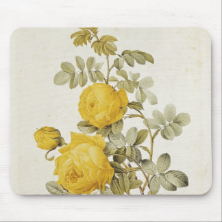Rosa Sulfurea  from 'Les Roses' Mouse Pad