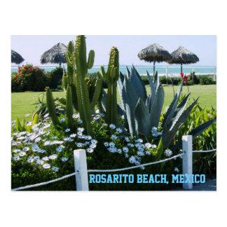 Rosarito Beach, Mexico (Cacti) Postcard
