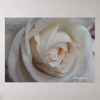 Rose 16 poster