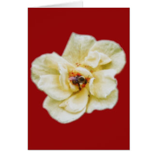 Rose and Bee Card