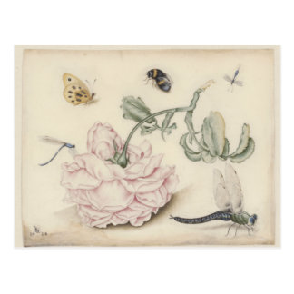 Rose and Five Insects Postcard