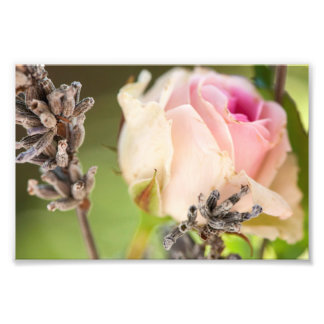 Rose and lavender photo print