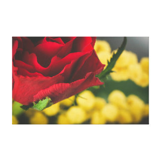 Rose and mimosas canvas print