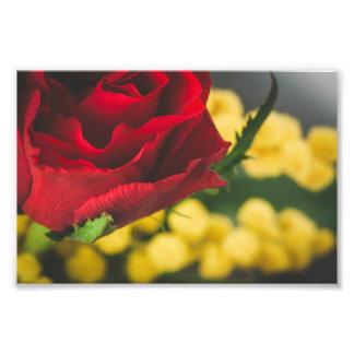 Rose and mimosas photo print