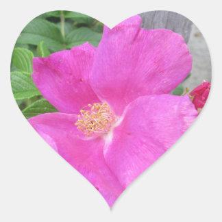 Rose Beach Plum Pink Heart Sticker
