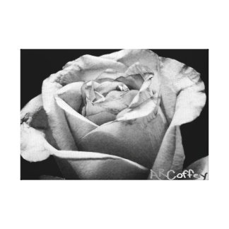 Rose (Black and White) Canvas Gallery Wrap Canvas