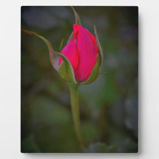 Rose Bloom Plaques