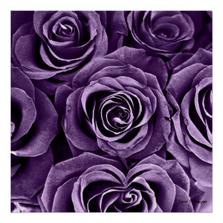 Rose Bouquet in Purple Poster