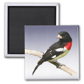 Rose-breasted Grosbeak Magnet