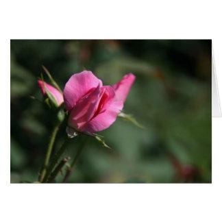 Rose Bud Note Card