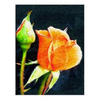 Rose Bud Postcard
