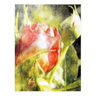Rose Bud Post Cards