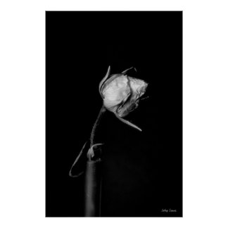 Rose bud posters