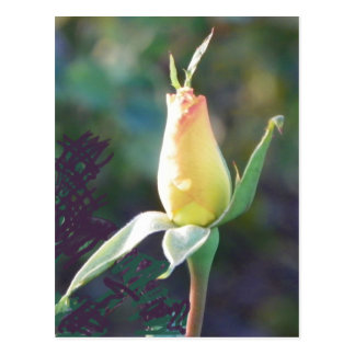 rose bud with a high five postcard