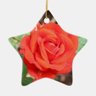 rose ceramic star decoration