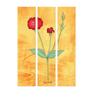 Rose Cockle Canvas Print