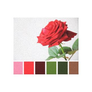 Rose Colour Chart Canvas Stretched Canvas Print