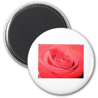 rose,deep pink rose 6 cm round magnet