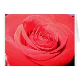 rose,deep pink rose greeting card