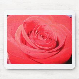 rose,deep pink rose mouse pad