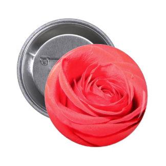 rose deep pink rose pin