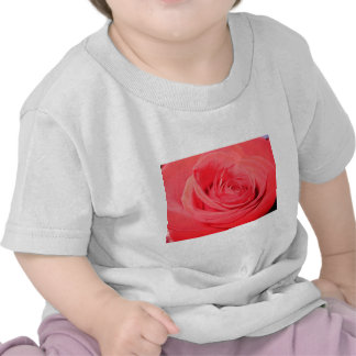 rose deep pink rose tee shirt